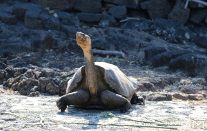 【加拉帕戈斯群岛图片】横跨南美大陆的精彩 - 第一站加拉帕戈斯群岛Galapagos Island