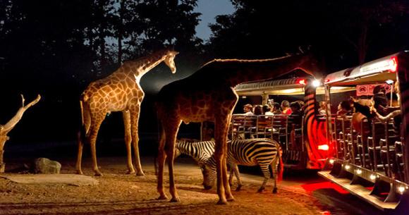 夜间野生动物园门票