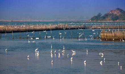 【盐洲岛】相约美丽的惠东盐洲岛拍日落滩涂,观鹭鸟,听海浪声声2日游