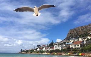 【好望角自然保护区图片】你好 彩虹之国——七彩南非深度游
