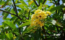 巴厘岛 宝藏纪念