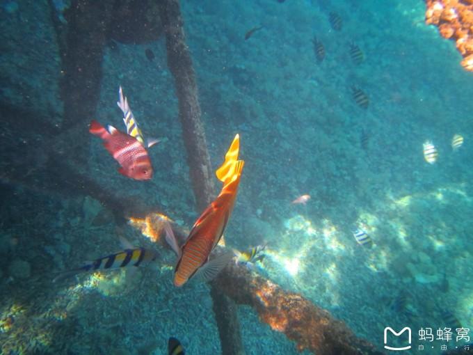 探寻神奇海底世界-仙本那邦邦岛6日亲子游