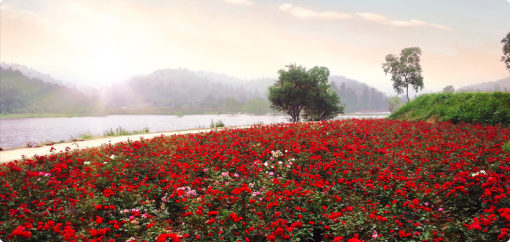 【武汉出发】木兰草原+玫瑰园二日游