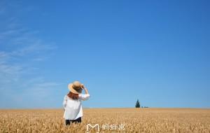 【山梨县图片】北海道,春风十里不如你