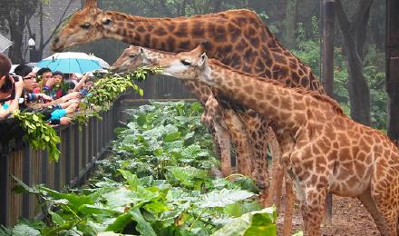 长隆欢乐世界+野生动物世界+珠海海洋王国3日游