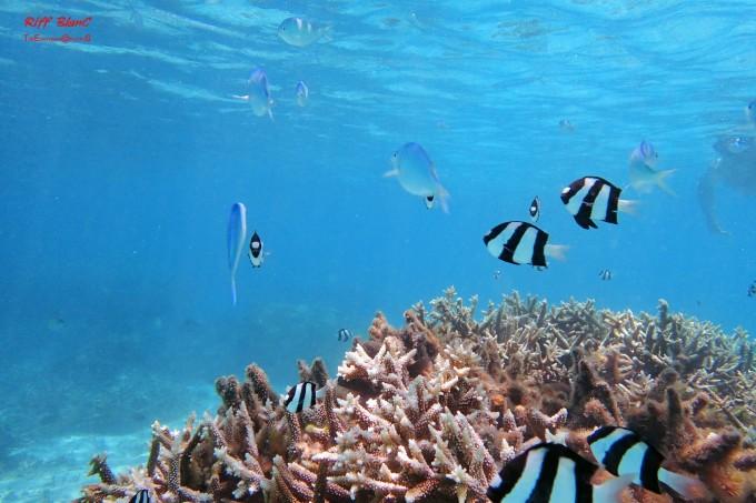 美国 关岛 游记之潜水篇 20160704-0711