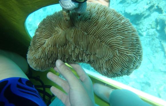仔细欣赏海底的珊瑚和鱼群,可以在海底尽情的享受来自小动物们的亲密