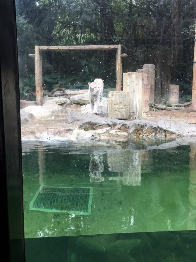 珠海海洋公园+广州长隆野生动物园+大马戏五天四晚