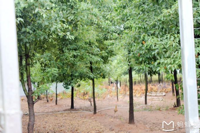 秋冬季树木养护