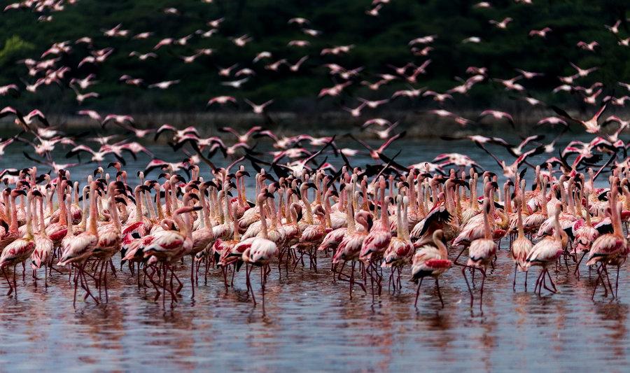 燃烧的博格利亚湖——肯尼亚纪行(7)