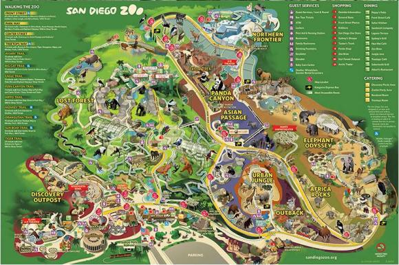 """【景点介绍】 圣地亚哥动物园是全球最大的动物园之一,它占地100英亩,在这片山丘绿林情意的广袤地带,拥有世界上最先进的管理设施,栖息着800多种动物,包括猎 豹、麝香牛、赤熊、火烈鸟等稀有物种,其中动物园以""""熊猫区""""人气最旺,熊猫都是从中国运来,展区位于动物园的正中央,这里每天吸引了许多的游客。公园内 有bus可供游人乘坐,也可以搭乘空中缆车skyfari。除了动物,园内随处可见的亚热带植物群落也很有名。 快来见一见熊猫家庭最新成员——出生在圣地亚哥的第"""