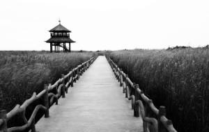 【东营图片】息壤:神奇的土地 ----东营二日游