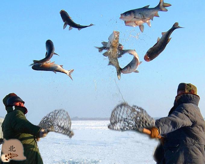 新疆吉木萨尔有多少人口_人口普查