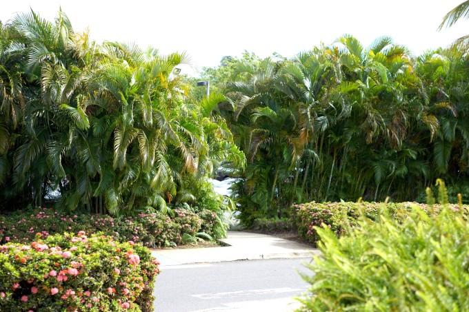 波多黎各自助遊攻略